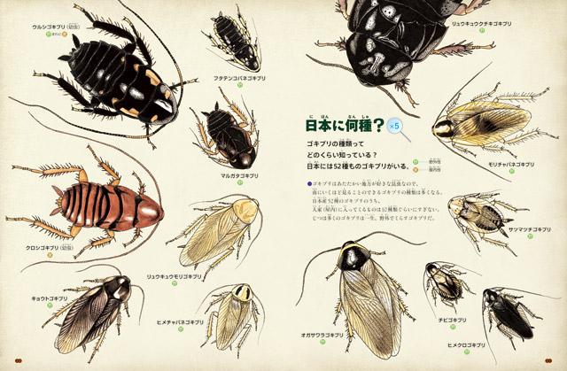 ゴキブリ図鑑